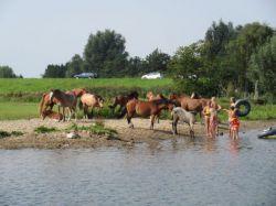 154.Pferde-an-der-Ijsseltrenke